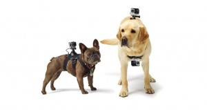 GoPro Fetch Mount for pets