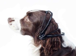 No More Woof wearable devices for pets