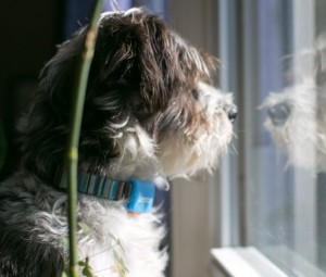 Pip GPS wearable devices for pets