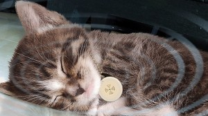 SticknFind wearable devices for pets