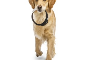 Voyce dog collar, wearable devices for pets